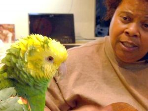 Homeless jazz musician finds solace singing with parrot